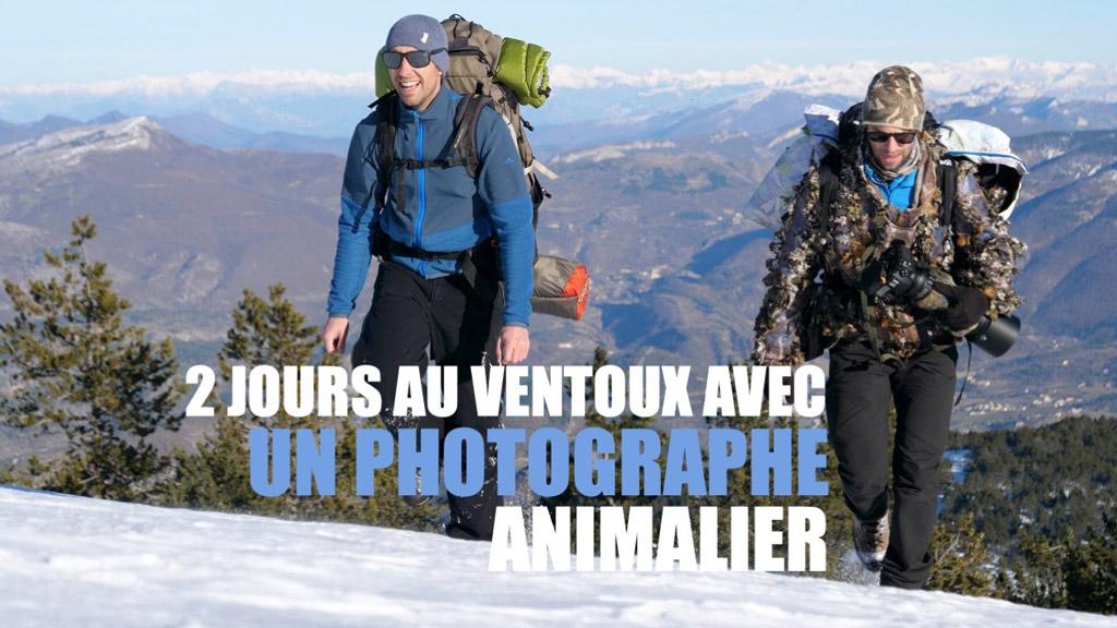 2 jours avec un photographe animalier en immersion sur le massif du Ventoux !
